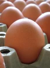 huevos en las manos